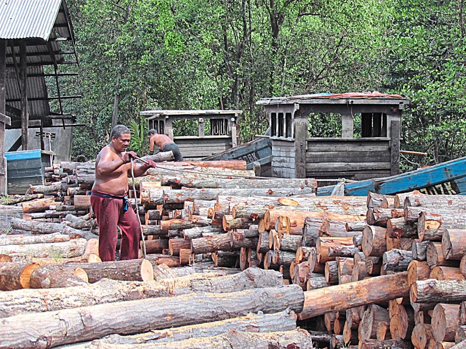These mangrove logs have been sustainably harvested for decades from the Matang forest reserve to make charcoal.