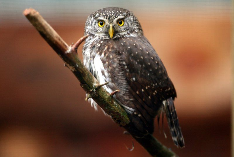 Night Owls May Face Special Challenges >> Microsoft S Outlook Webmail Now Also Caters To Night Owls The Star