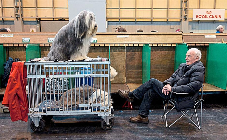 Two Bearded Collies and their human, waiting to compete