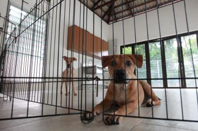 Selangor SPCA shocked by recent cases of animal cruelty