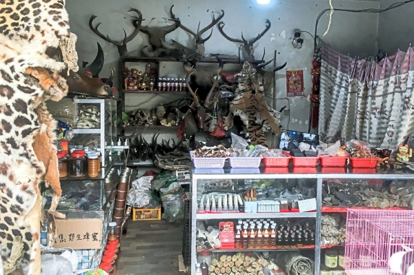 Illegal trade: This shop openly sells wildlife and animal products in Panghsang, eastern Shan State. u2014 AFP