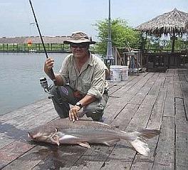 f_12catfish