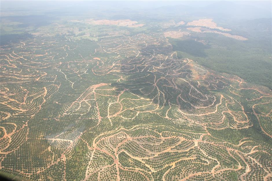Satellite data can provide information on changes in landuse, such as when forests are cleared for plantations. Photo: AZHAR MAHFOF/The Star
