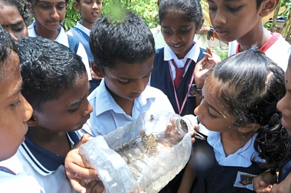 Pupils getting upclose with a frog at their school organic farm.